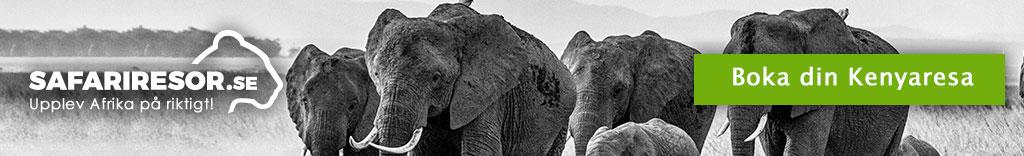 Elefanter i Kenya
