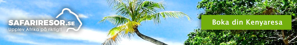 Kenya Palm